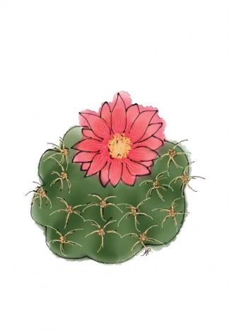 Cactus - succulent (1)