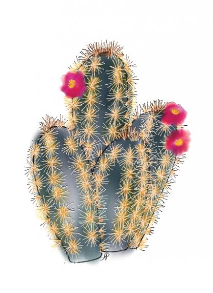 Cactus - mini organ pipe