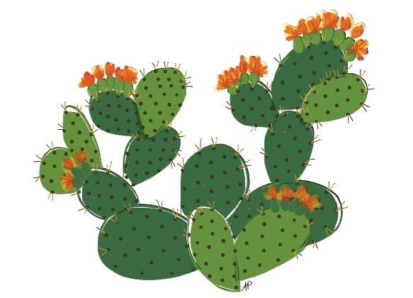 Cactus-Prickly-Pear