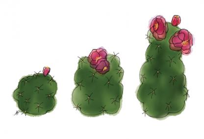 Cactus - Succulents (3)